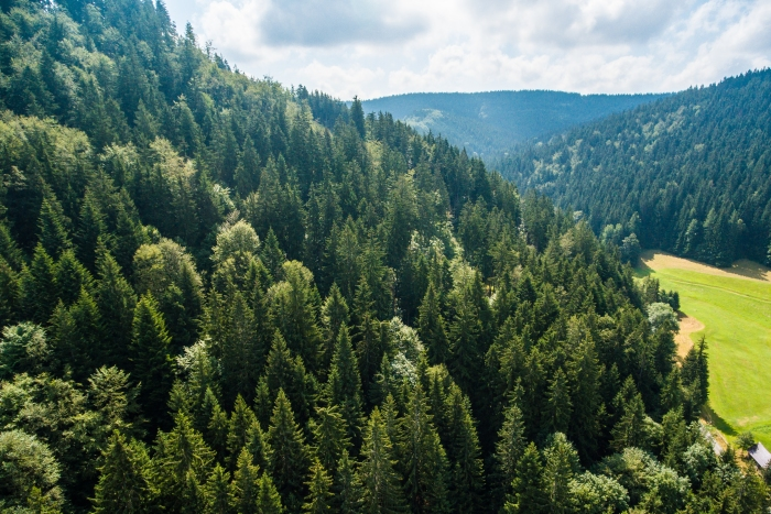 pure-nature-above-green-forest-on-the-hill-picjumbo-com.jpg
